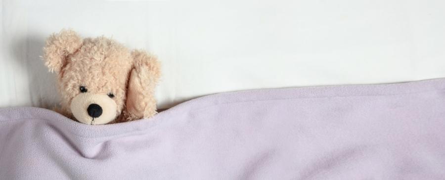 Orso dorme.jpg